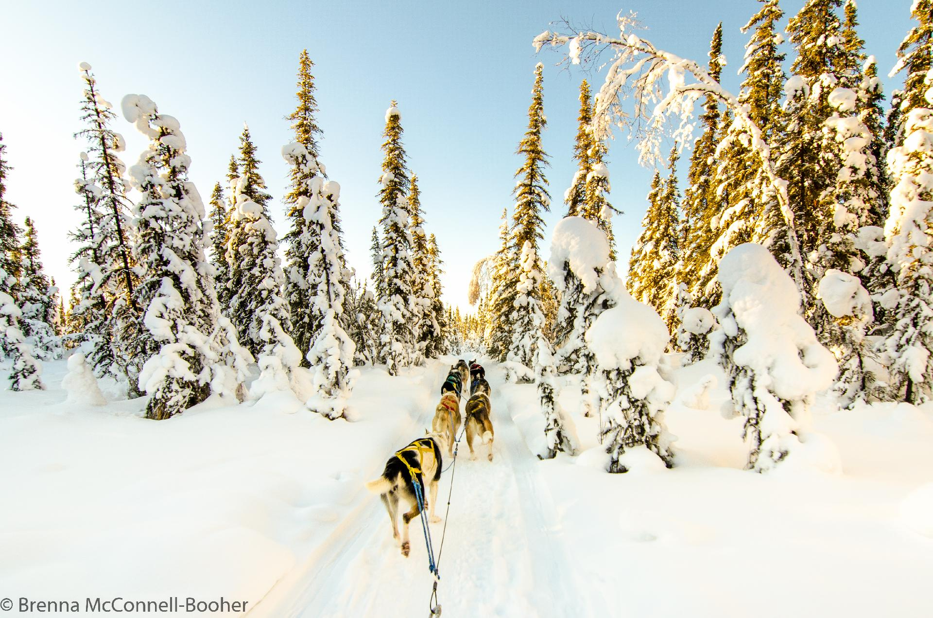 Alaska Life