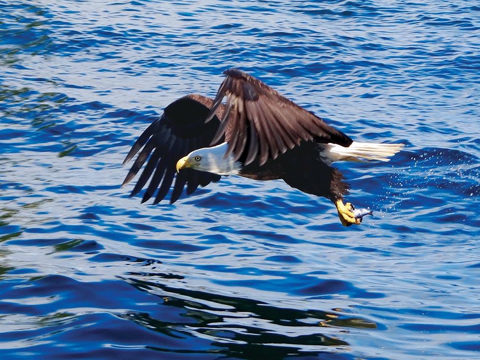 images_articles_galleries_2015-photo-winners_wildlife_readers