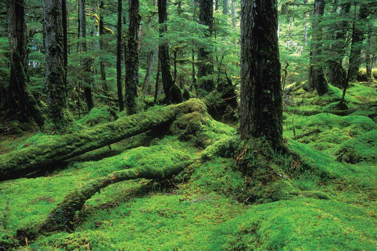 Cabin Fever in Tongass National Forest - Alaska Magazine